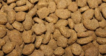 best dry dog food for german shepherds