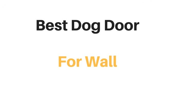 Best Dog Door For Wall (Through Wall Dog Door): Reviews & Buyer's Guide