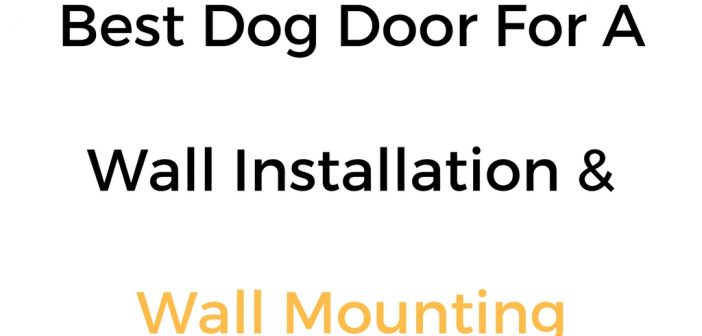 Best Dog Door For Wall Installation Mounting Reviews Buyers Guide