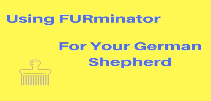 Using A Furminator For Your German Shepherd: Long or Short? And What Size?