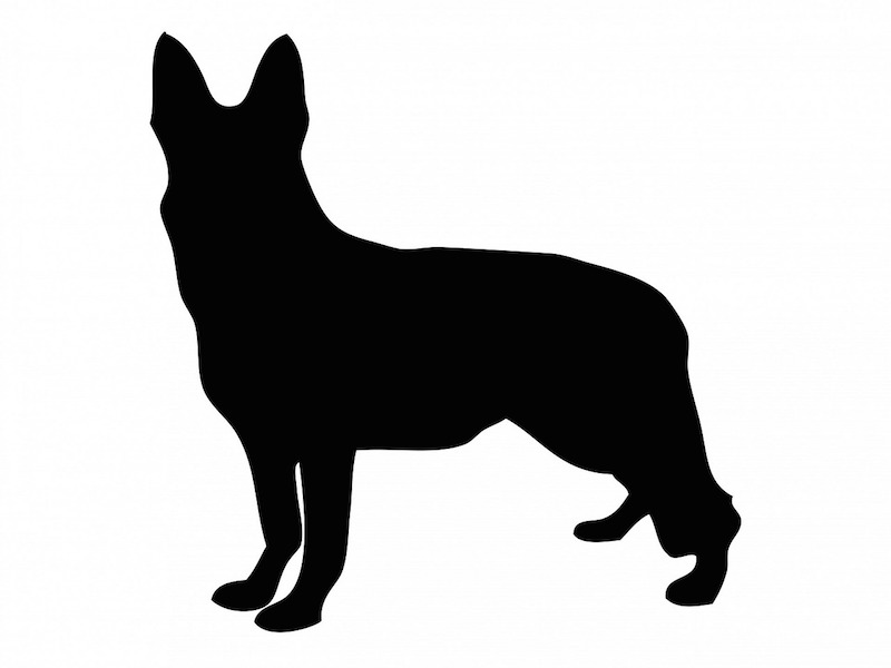 Origin, History & Evolution Of The German Shepherd Blood Lines: 1899 to Now