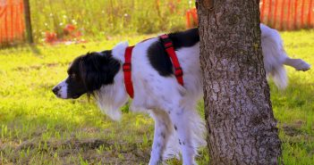 Outdoor Dog Potty Solutions