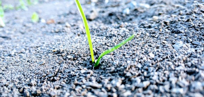 Best Grass Seed For Dog Urine Spots Reviews Amp Information