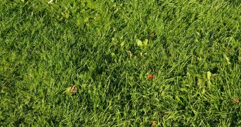 Does Dog Spot Gone Lawn Treatment Really Work For Dog Urine On Grass?