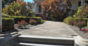 Dog Friendly Landscaping Without Grass