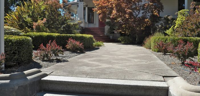 Dog Friendly Landscaping Without Grass Ideas Options