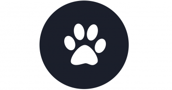 Dog Paw/Pad Care 101: What To Know