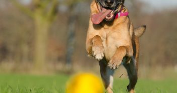 Funny Dog Toys: A List Of The Most Hilarious & Silly Toys For Dogs