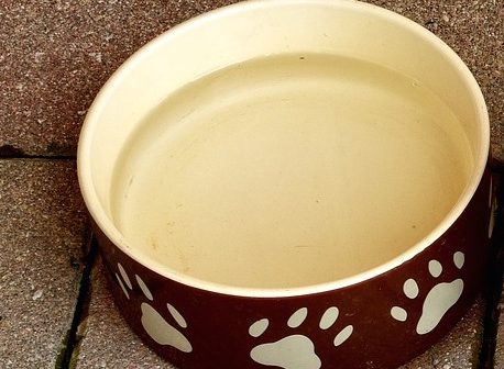best ceramic and stoneware dog bowls