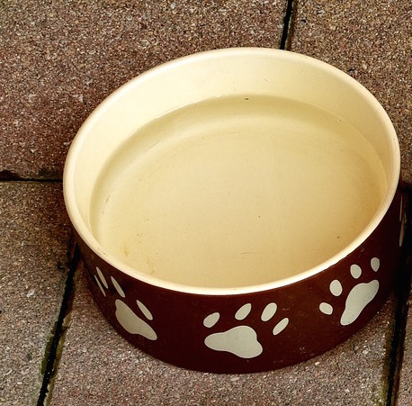 Best Ceramic Dog Bowls Amp Beautiful Stoneware Dog Bowl Options