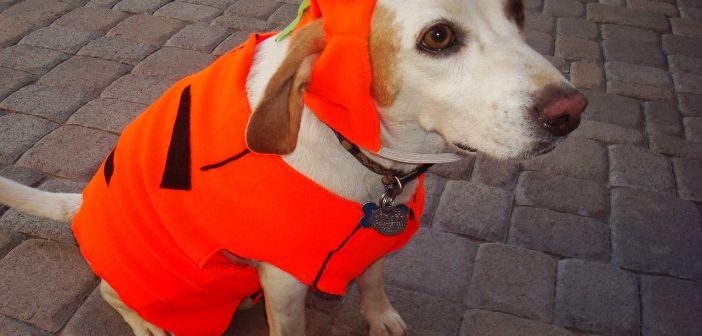 Buying Dog Costumes: 9 Common Mistakes Owners Make