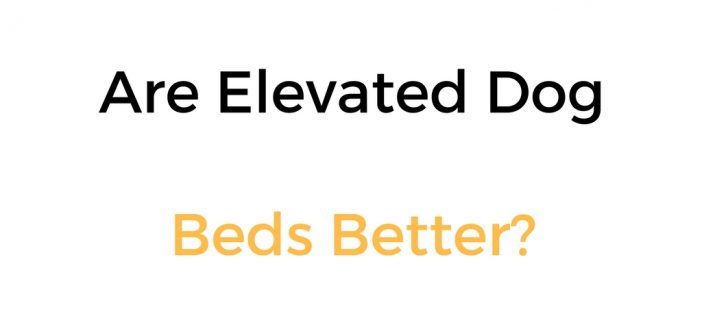 Are Elevated Dog Beds Better? Benefits Of Elevated Dog Beds, & Disadvantages