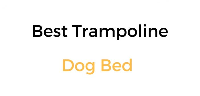 Best Trampoline Dog Bed That Is Off The Floor: Reviews & Buyer's Guide