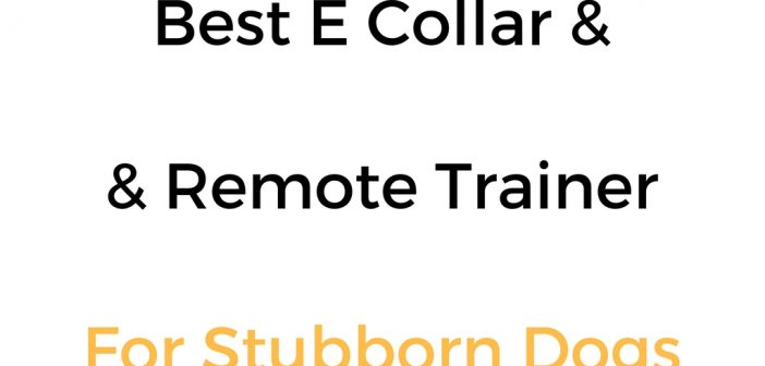 Best E Collar/Remote Training Collar For Stubborn Dogs
