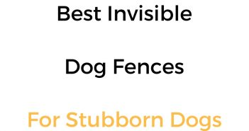 Best Invisible Dog Fences For Stubborn Dogs