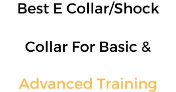 Best E Collar, Shock Collar & Remote Training Collar For Basic Obedience, & Advanced Training