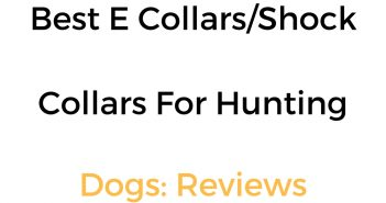 Best E Collar, Shock Collar & Remote Training Collar For Hunting Dogs