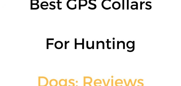 Best GPS Collar & System For Hunting Dogs