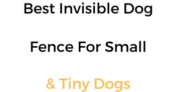 Best Invisible Dog Fence For Small Dogs: In Ground & Wireless Options