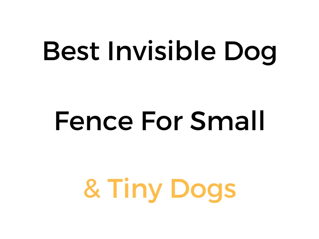 Best Invisible Fence For Small Dogs: In Ground & Wireless Options