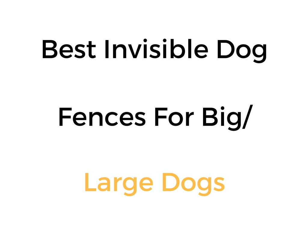 Best Invisible Fence For Large Big Dogs In Ground