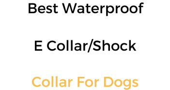 Best Waterproof Dog Shock Collar, E Collar & Remote Training Collar
