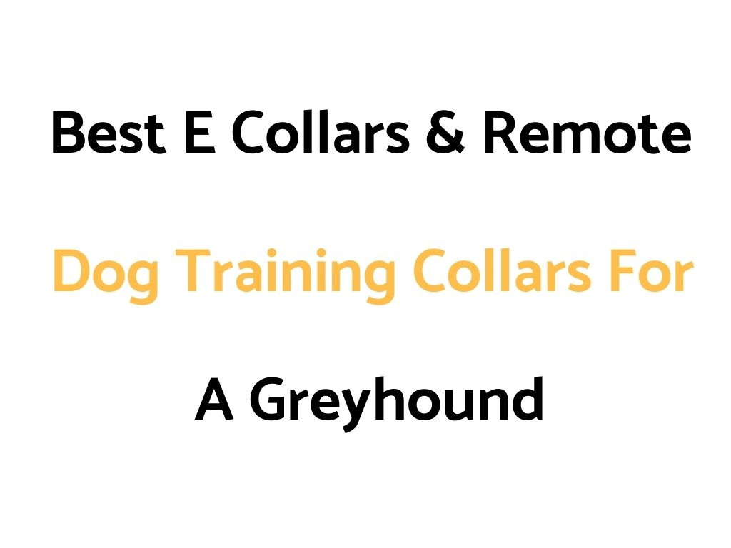 Bark Collar vs Remote Training Collar: Which Is Better?