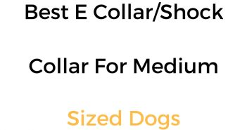 Best E Collar, Shock Collar & Remote Training Collar For Medium Dogs