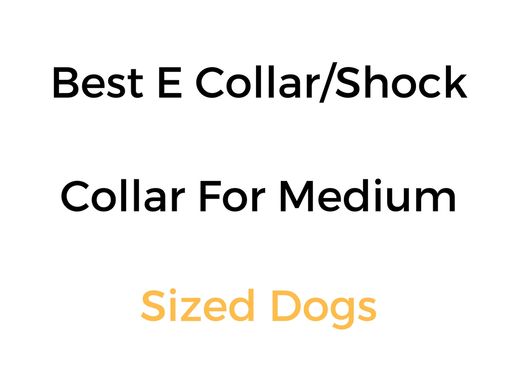 What Is The Best Shock Collar For Dogs