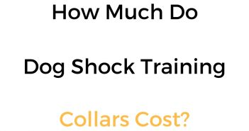 How Much Is A Shock Collar/Remote Training E Collar For A Dog?