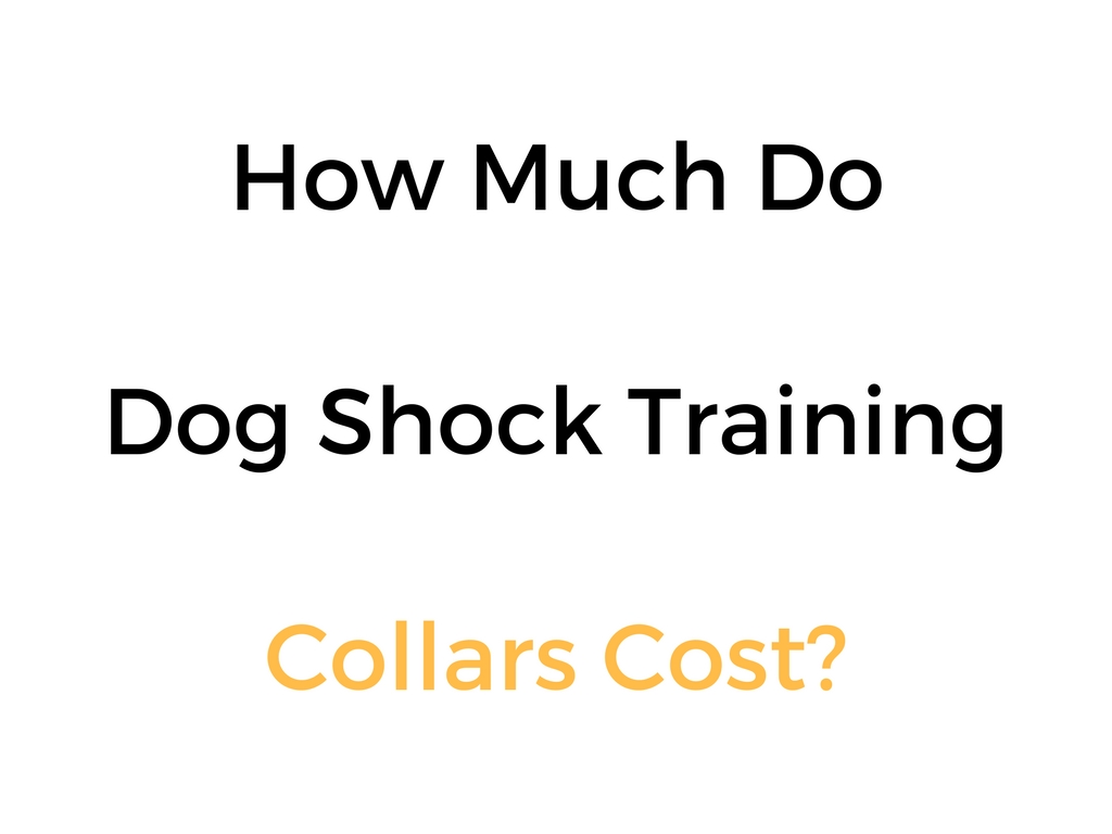 How Much Do Dog Shock Collars Cost