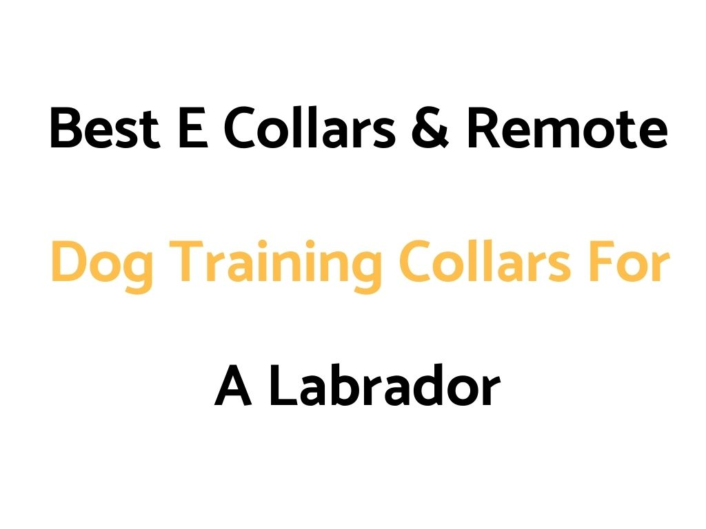 Best Shock Collar, E Collar & Remote Trainer For Dogs in 2018/19: Reviews & Buyer's Guide