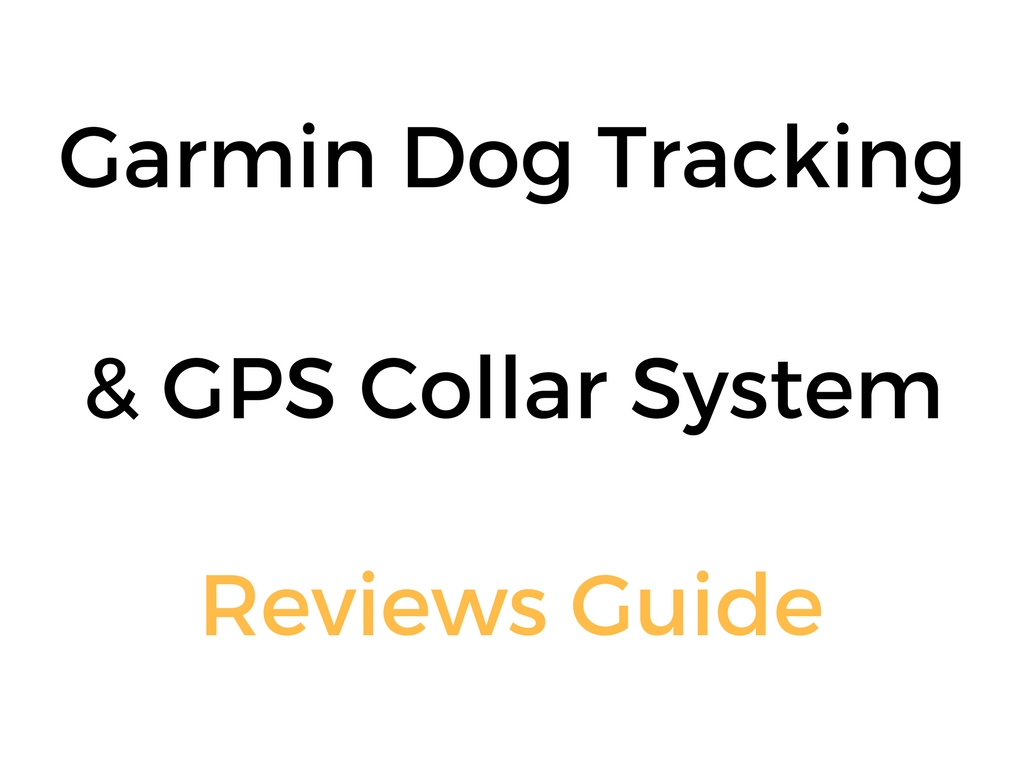 Best Dog Training Collar With Gps