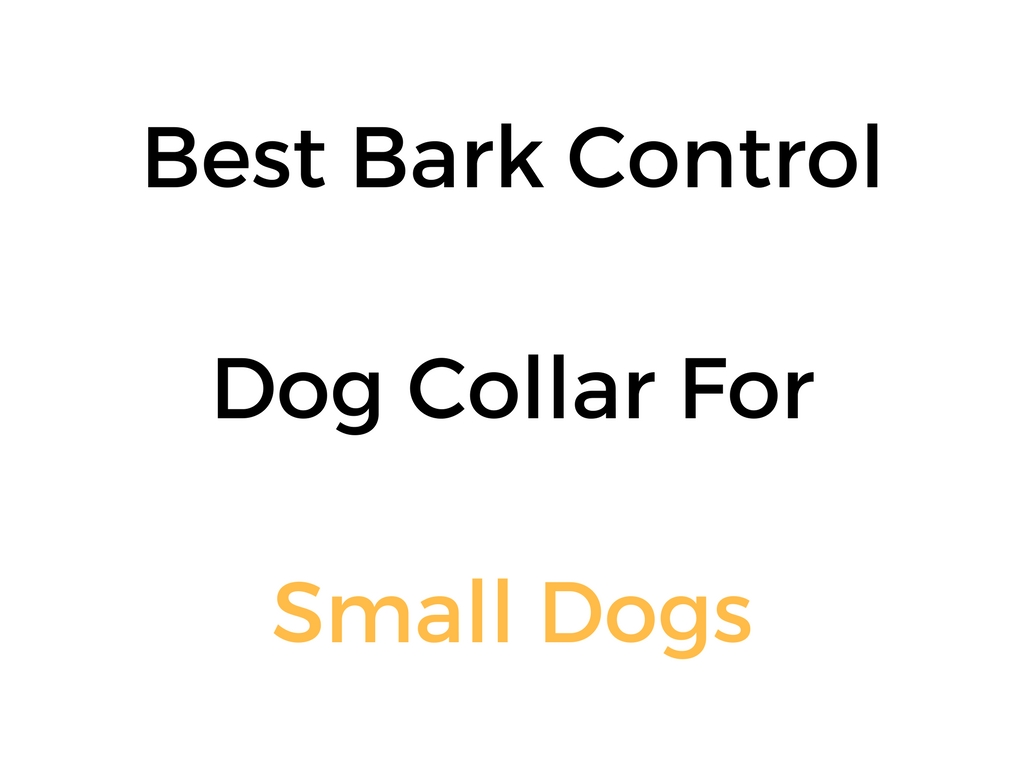 Best Vibrating Dog Collar