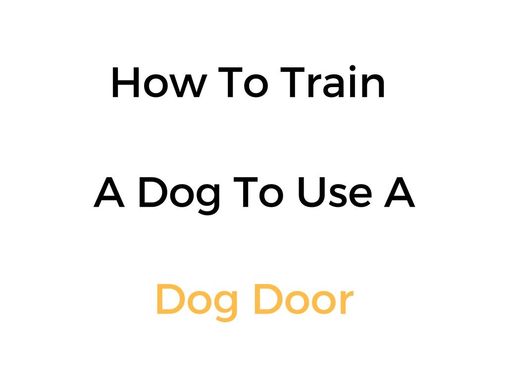 How To Train A Dog To Use A Dog Door Step By Step