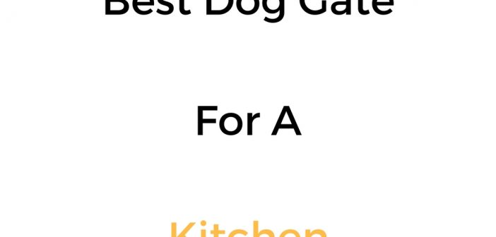 Best Dog Gate For A Kitchen