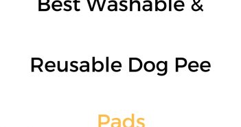 Best Washable & Reusable Dog Pee Pads