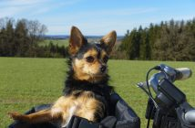 Best Dog Bike Baskets, Carriers & Seats: Reviews & Buyer's Guide
