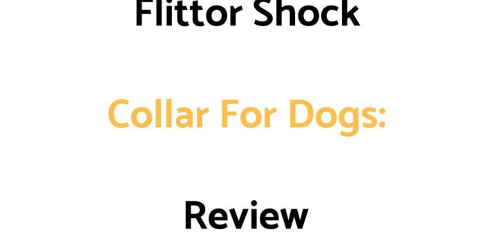 Flittor Shock Collar For Dogs: Review