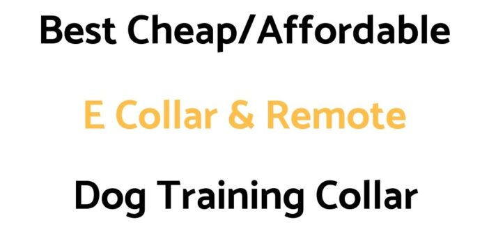 Best Cheap/Affordable E Collar & Remote Dog Training Collar: Reviews & Buyer's Guide