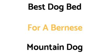 Best Dog Bed For A Bernese Mountain Dog
