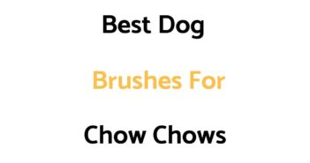 Best Dog Brushes For Chow Chows