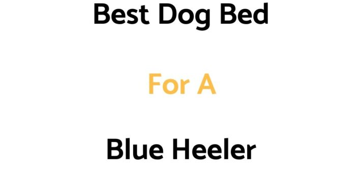 Best Dog Bed For A Blue Heeler: Top Beds, Reviews & Buyer's Guide