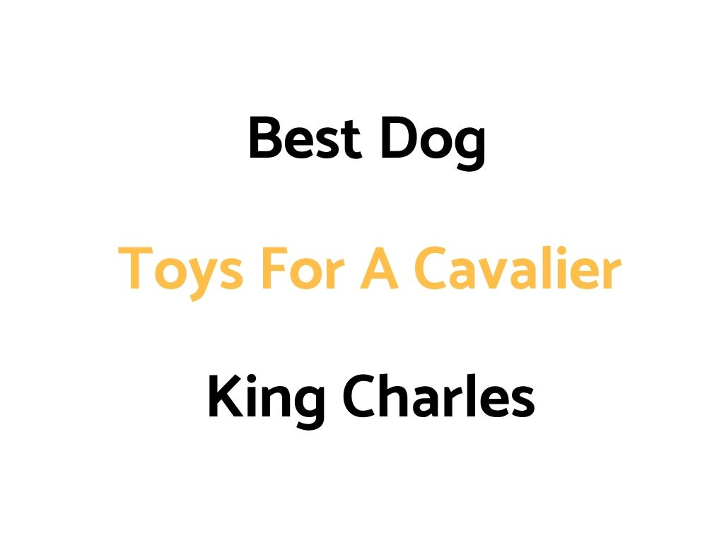 Best Dog Toys For A Cavalier King Charles