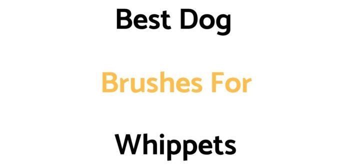 Best Dog Brushes For Whippets