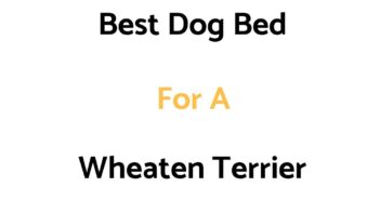 Best Dog Bed For A Wheaten Terrier: Top Beds, Reviews & Buyer's Guide