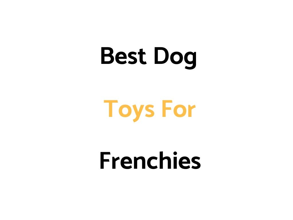Best Dog Toys For French Bulldogs