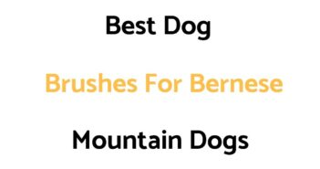 Best Dog Brushes For Bernese Mountain Dogs