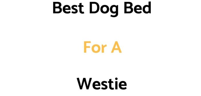Best Dog Bed For A Westie: Top Beds, Reviews & Buyer's Guide