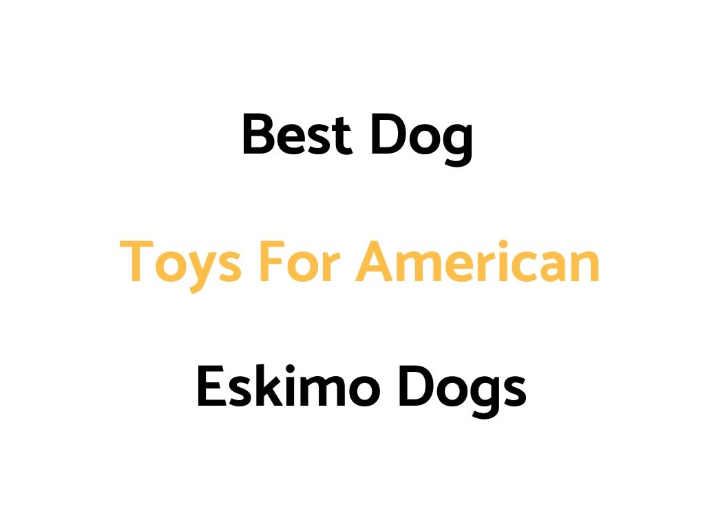 Best Dog Toys For American Eskimo Dogs